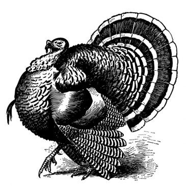 Thanksgiving Vintage Turkey Graphic